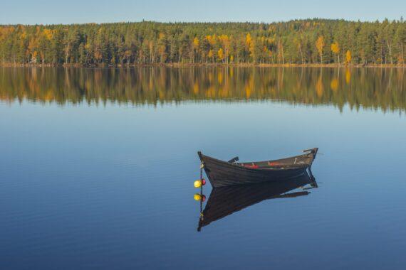 En eka i trä ligger i en spegelblank sjö.