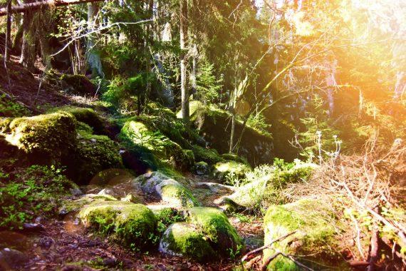 Lummig skogsparti med mossa, stenar, träd och stigar som skiftar i orange och gult solljus.