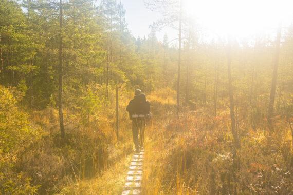 Höstpromenad i skogen.