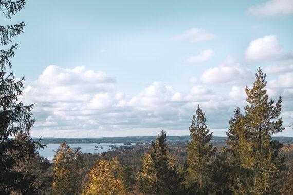 Utsikt över grantoppar och en sjö från Skåle klint.
