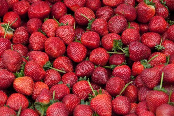 Massa röda jordgubbar fyller bilden